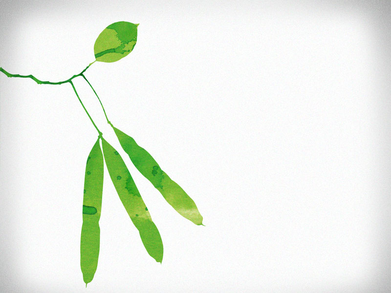 plantis_fragment3